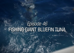 Fishing Giant Bluefin Tuna