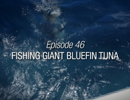 Episode 46 | Fishing Giant Bluefin Tuna