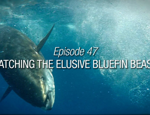 Episode 47 | Catching The Elusive Bluefin Beast